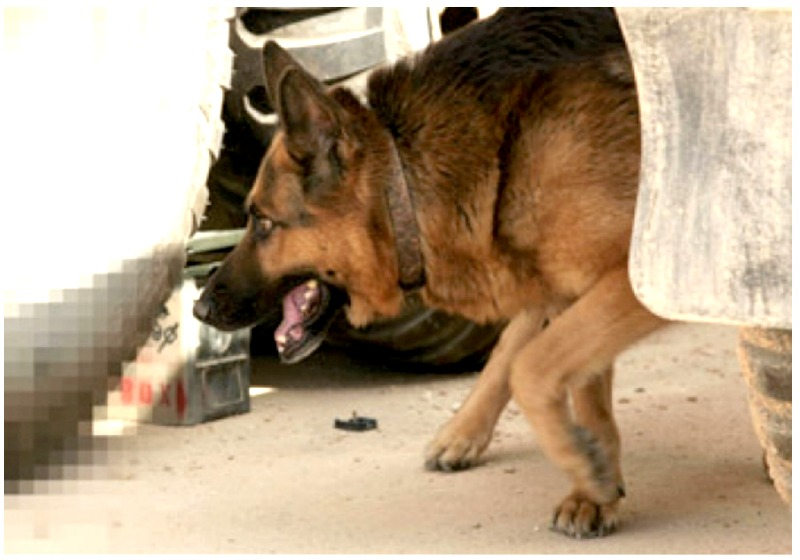 IED Recognition for K9 Handlers